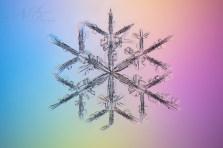 20170207-0211, 十勝岳吹上温泉白銀荘にて雪の結晶撮影