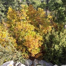 Autumn Transformation – A 2MefromHim Devotional