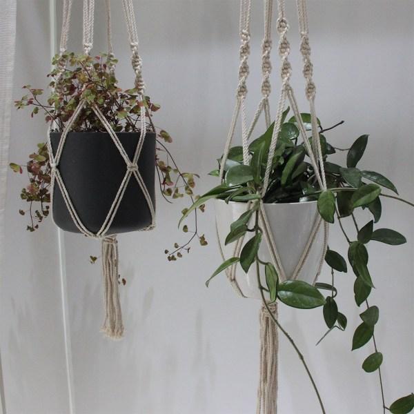 Store planter i hængepotter
