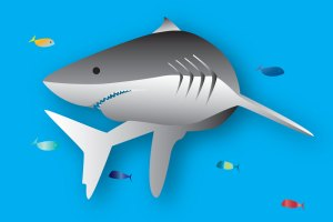 Shark illustration and logo design