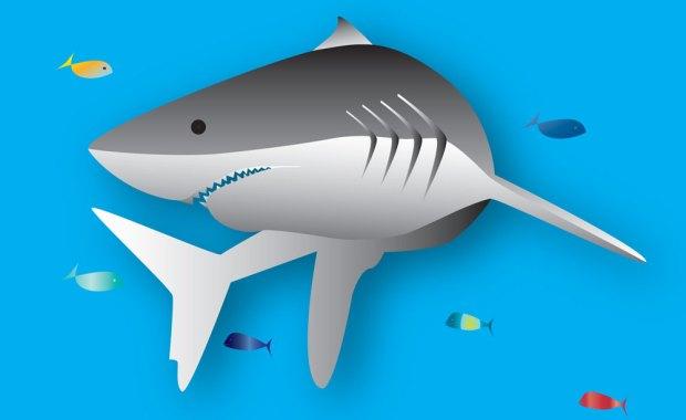 Shark illustration and logo design
