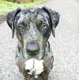 Otis, Office Dog