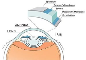 Northampton Corneal Disease Diagnosis and Treatment