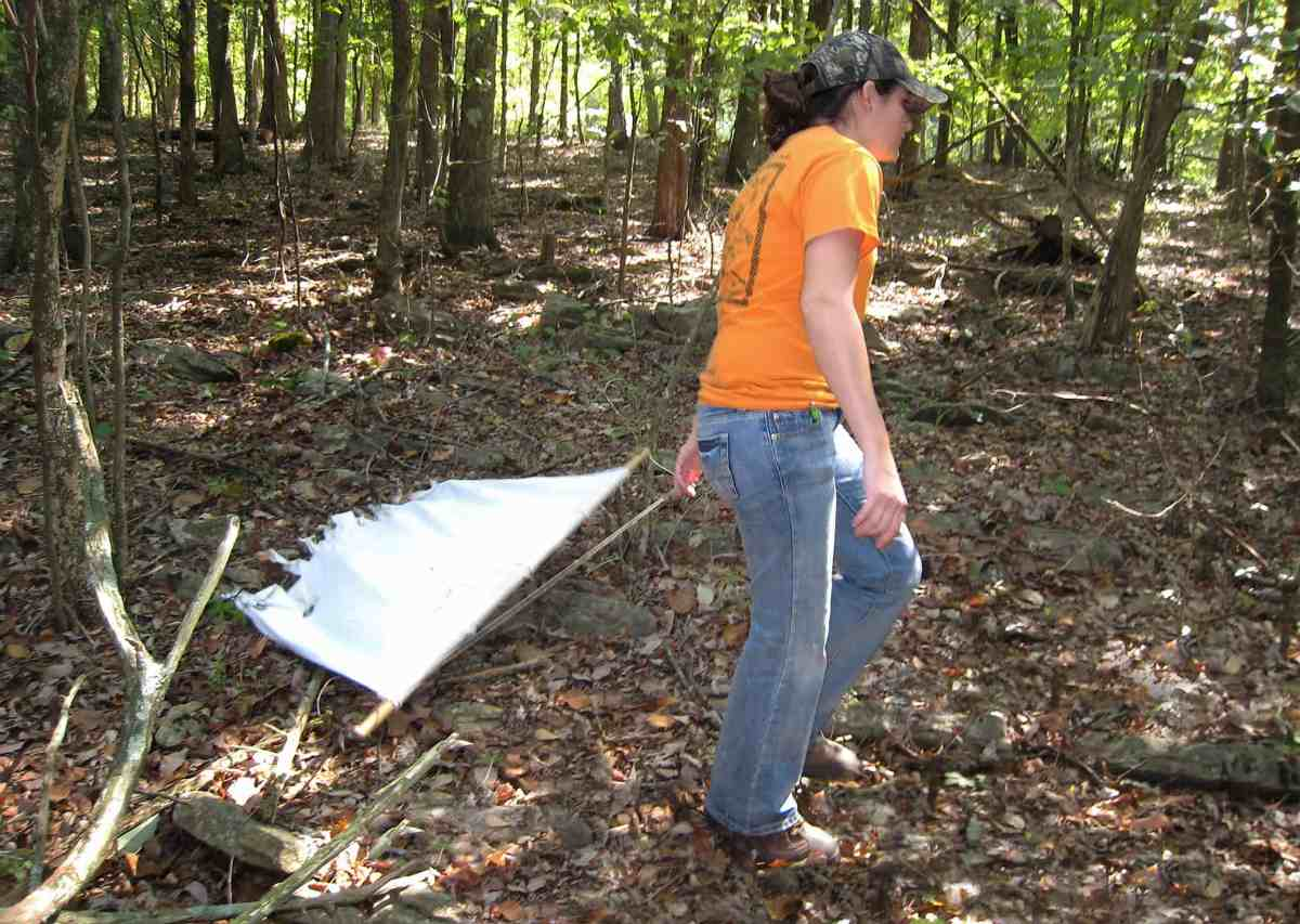 A field scientist drags a cloth across the ground to gather ticks