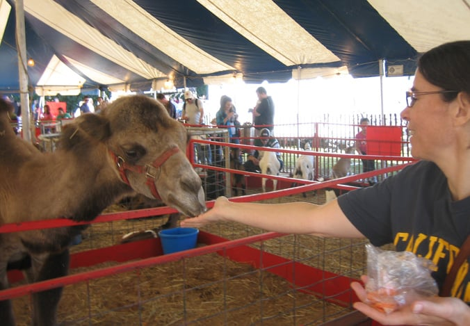 NCHN Editor Rose Hoban feeds camels at the 2010 NC State Fair. Photo courtesy Steve Tell