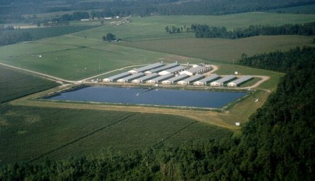 A waste lagoon outside of a hog farm. Photo courtesy N.C. Department of Environment and Natural Resources