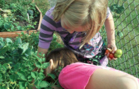 3rd graders in Dunkerton, IA harvesting tomatoes — at Dunkerton Community School.