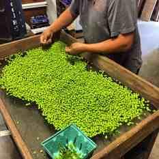 Peas shelled fresh at Carolina Country Fresh market in Pitt County.