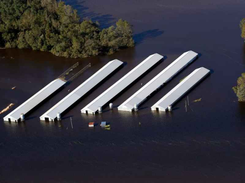Flooding after Hurricane Matthew inundated dozens of poultry farms in Eastern North Carolina. Photo shows and aerial view of inundated chicken houses.