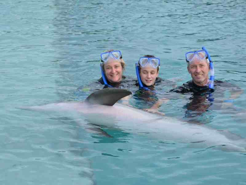 shows a family swimming in the ocean with dolphins, they are members of a Christian cost-sharing ministry, instead of having insurance