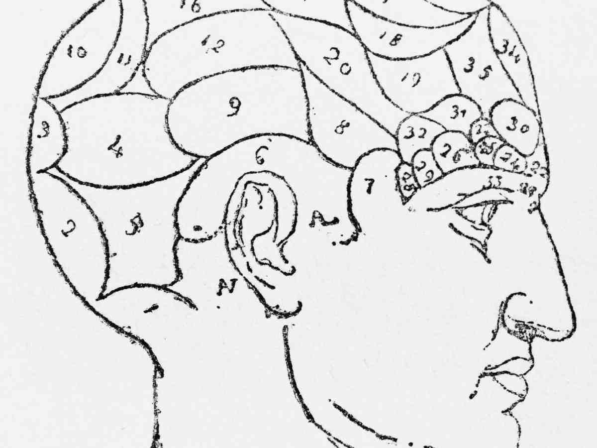 phrenology head drawing