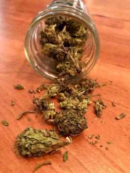 shows a jar displaying hemp flowers