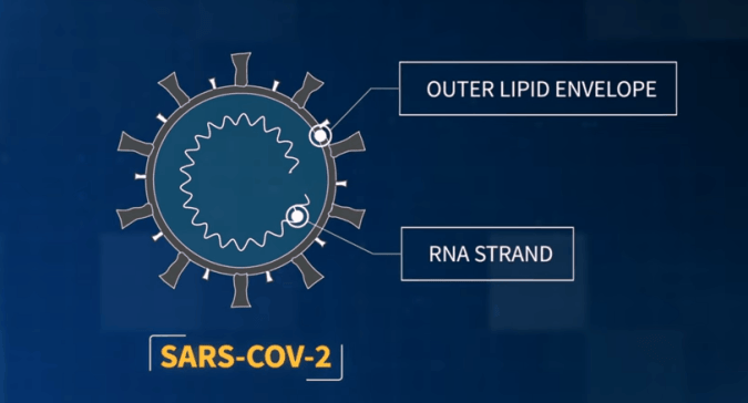 animated diagram of a coronavirus, with the outer lipid envelope and an RNA strand labeled