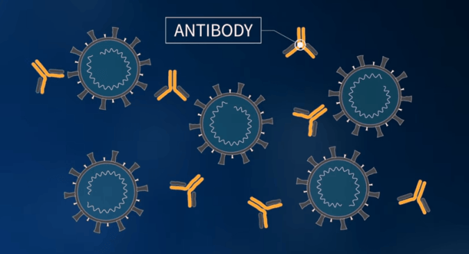 animated diagram of coronavirus being attacked by antibodies to demonstrate how a vaccine works