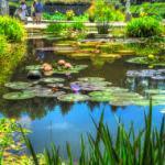 Biltmore Water Garden