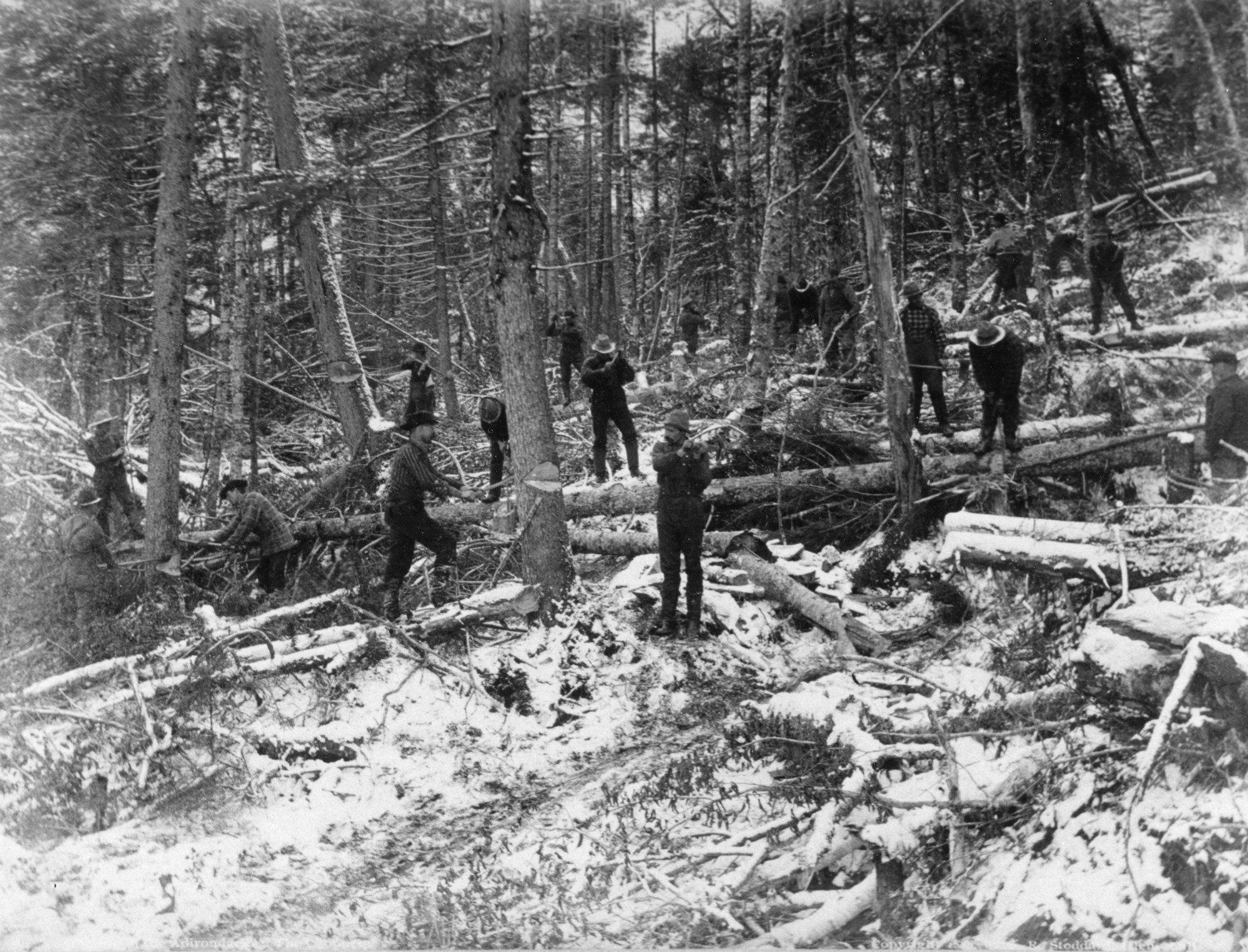 lumbermen felling and limbing