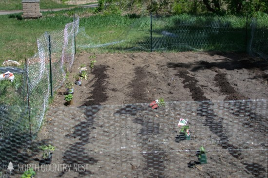 vegetable garden with new garden soil