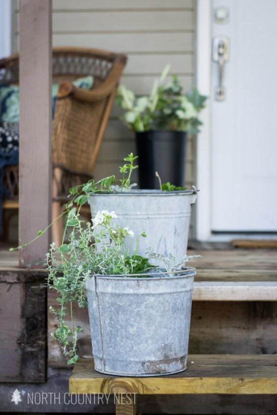 galvanized buckets with plants
