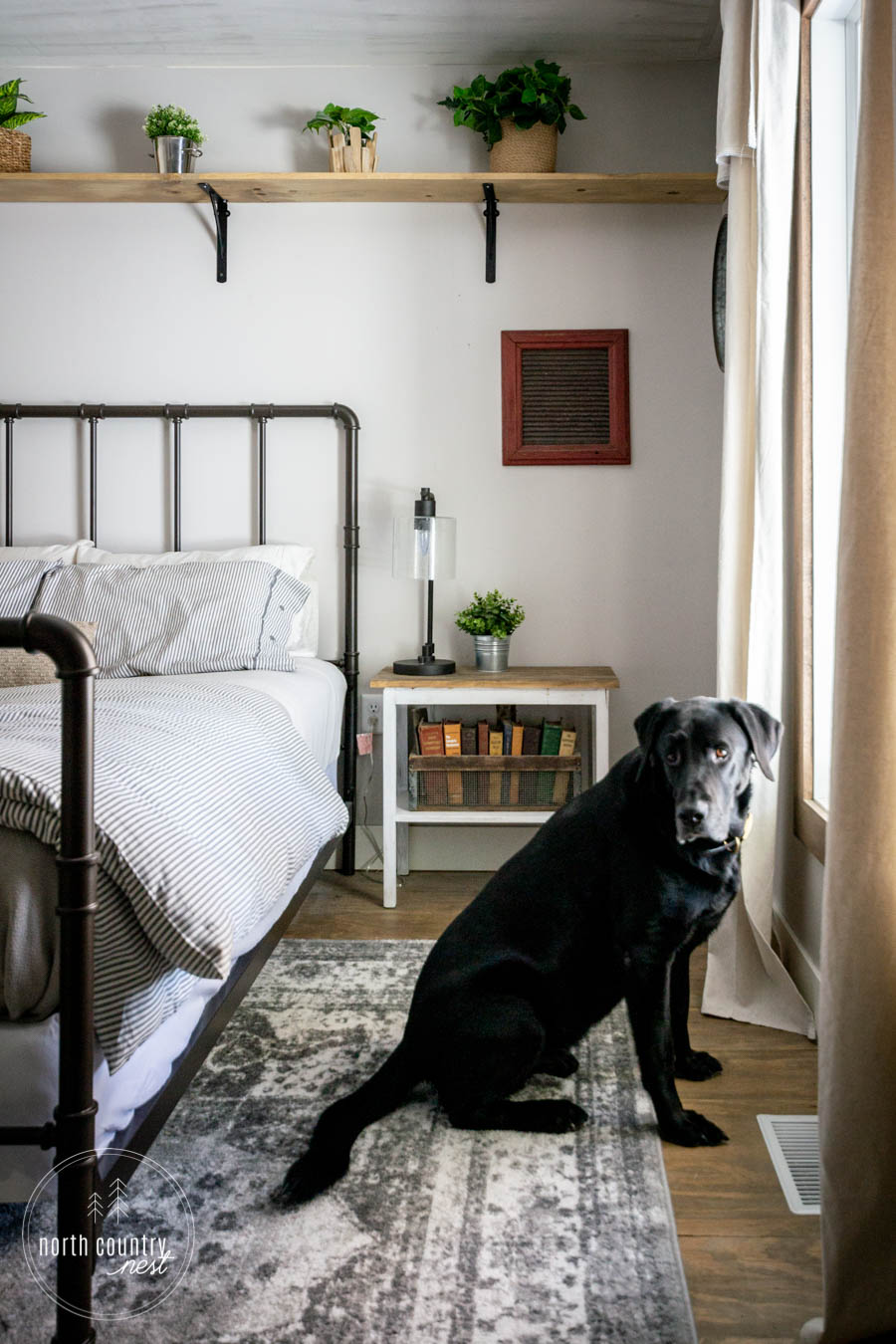 black lab in front of spring bedroom window