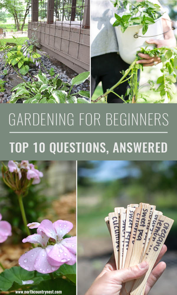 gardening for beginners, top ten questions answered