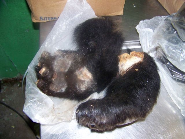 New law regulates North Country trade in black bear parts