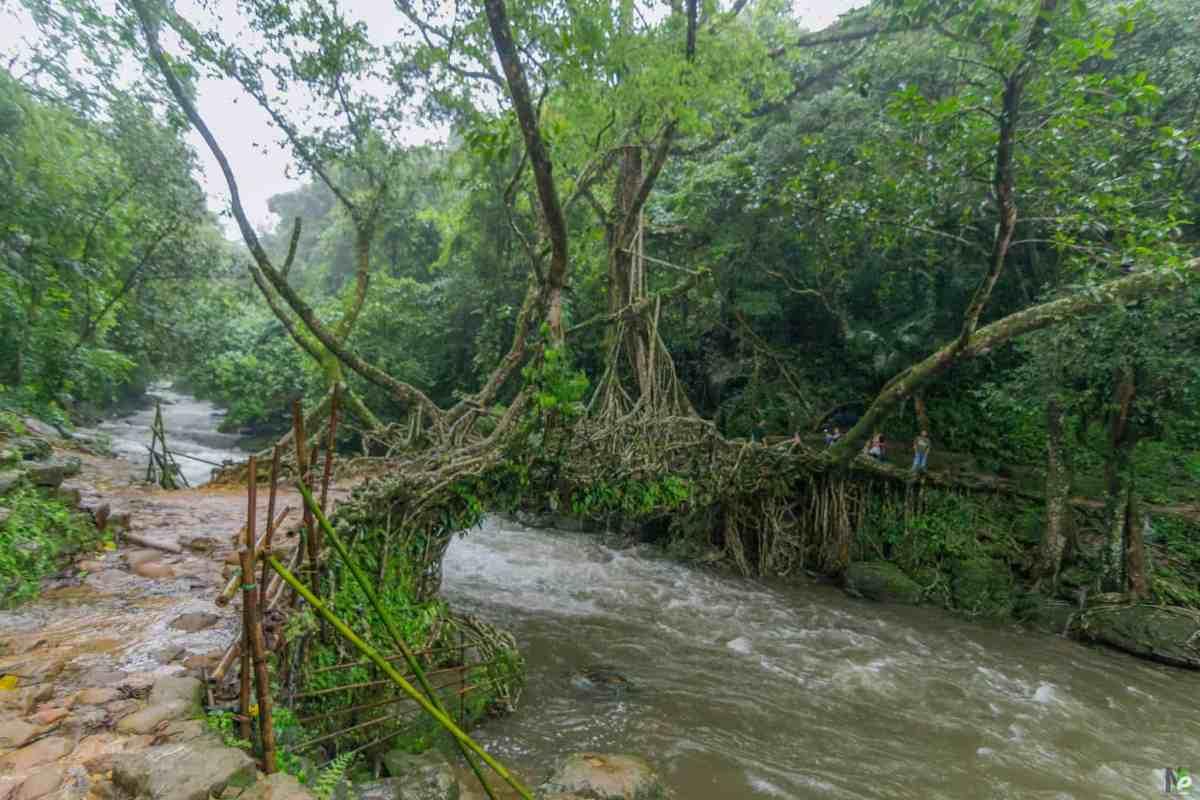 Living Root Bridge Of Nohwet, Riwai Mawlynnong