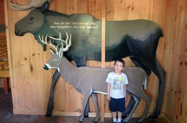 Squam Lakes Science Center Deer Measurement