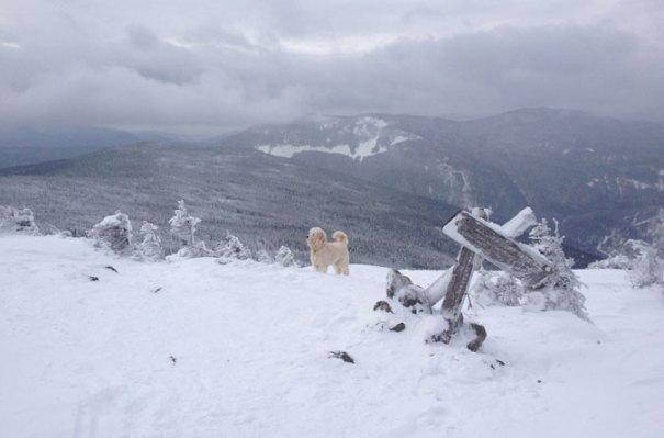Mt. Webster View