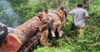 Assam: Fores officials seizes Illegal Sal Logs worth of Rs 10 Lakhs
