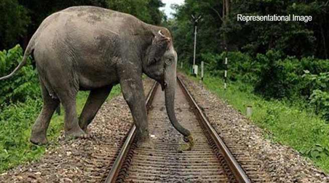 Assam: Lachit Express hit an Elephant near Gogamukh