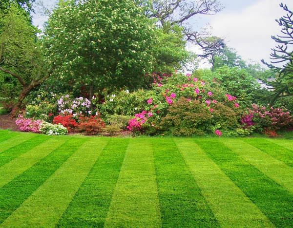 7 Steps To A Better Lawn Northeast Nursery