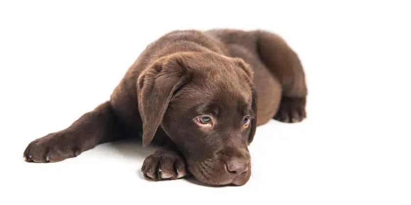 Puppy death foul play