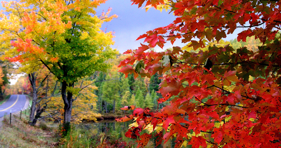 Fall Colors Wallpaper 1920x1080 Northern Wisconsin Autumn Realities Exceed Fantasies