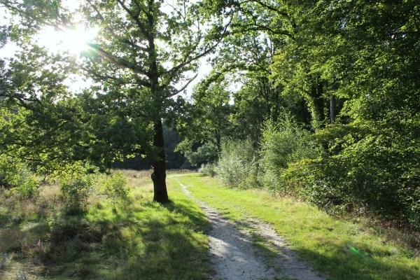 bakkeveen_zon_door_bomen
