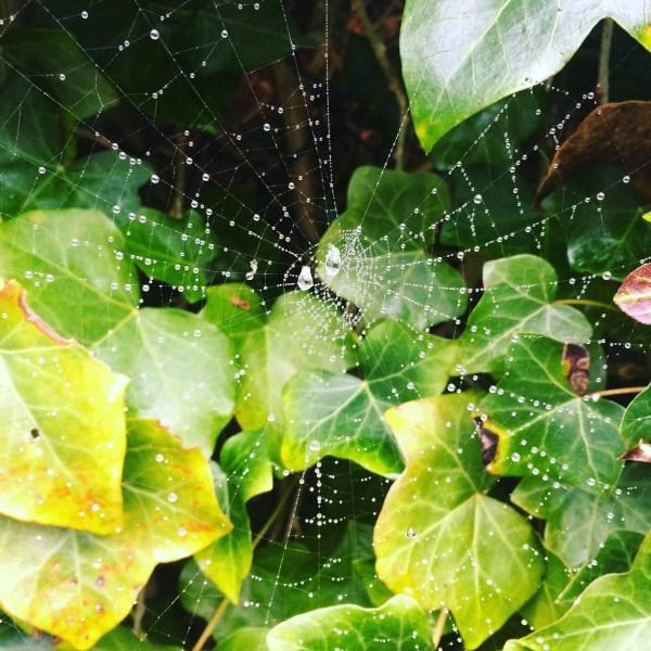 web_mist
