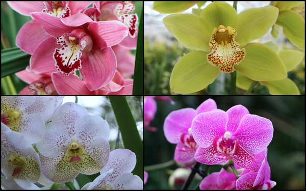 collage_orchideeen