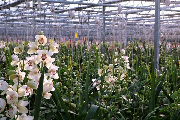 orchideeen_hoeve_luttelgeest_kassen
