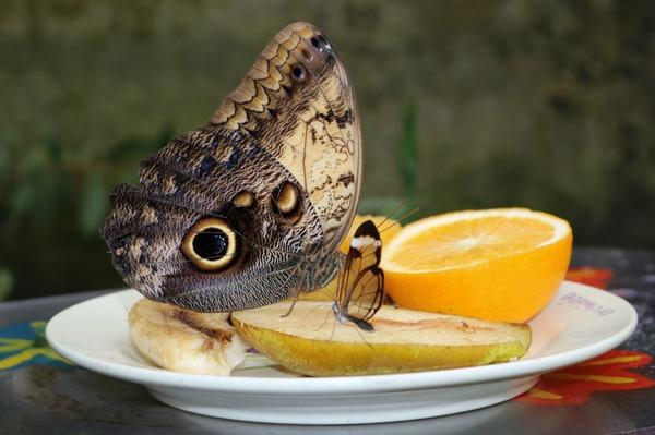 orchideeen_hoeve_luttelgeest_vlinder_fruit