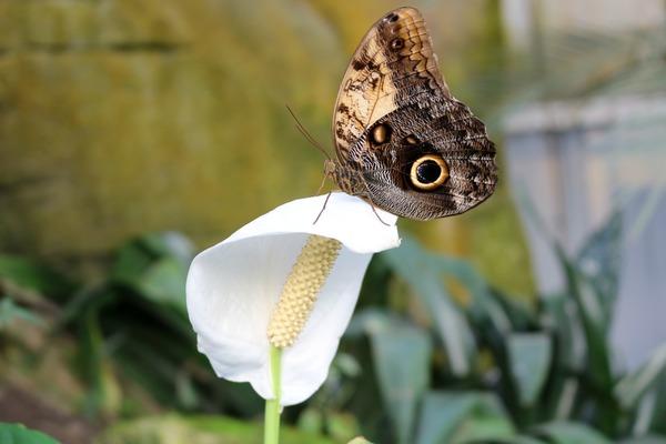 orchideeen_hoeve_luttelgeest_vlinder_op_witte_bloem
