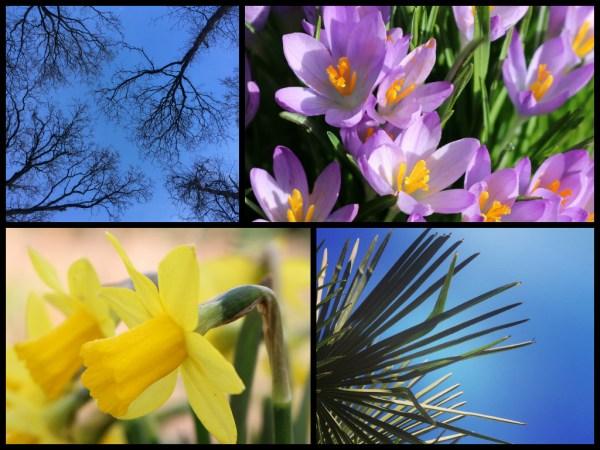 lente collage