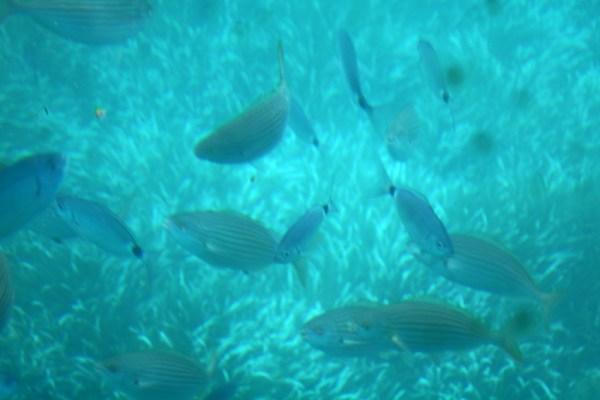 paguera boat trip aquarium boot mallorca