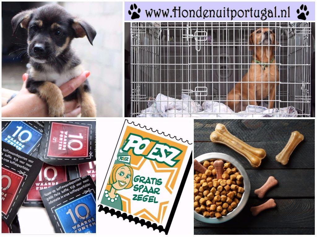 Help stichting 'Honden uit Portugal' met spaarzegels, koffiepunten en je overbodige (honden)spullen