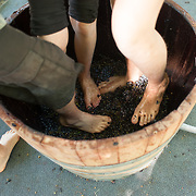 Image of Grape Stomp