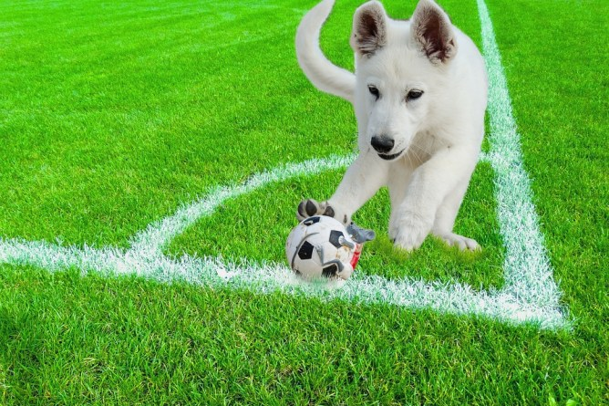 Dog playing with ball on turf