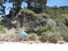 Beach view of campsite