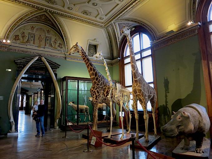 Natural History Vienna