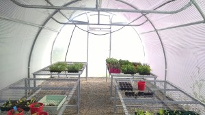Photo of inside the greenhouse.