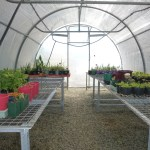 Photo of propagated plants in the greenhouse.