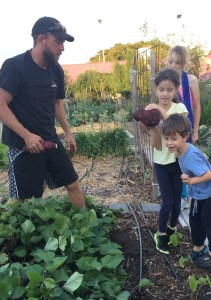 Photo of garden members and children picking sweet potatoes