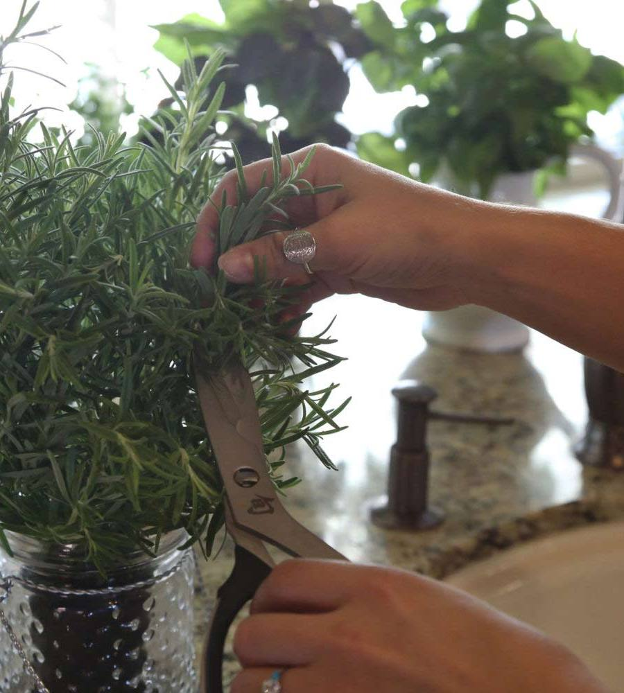 garden at your fingertips north shore living